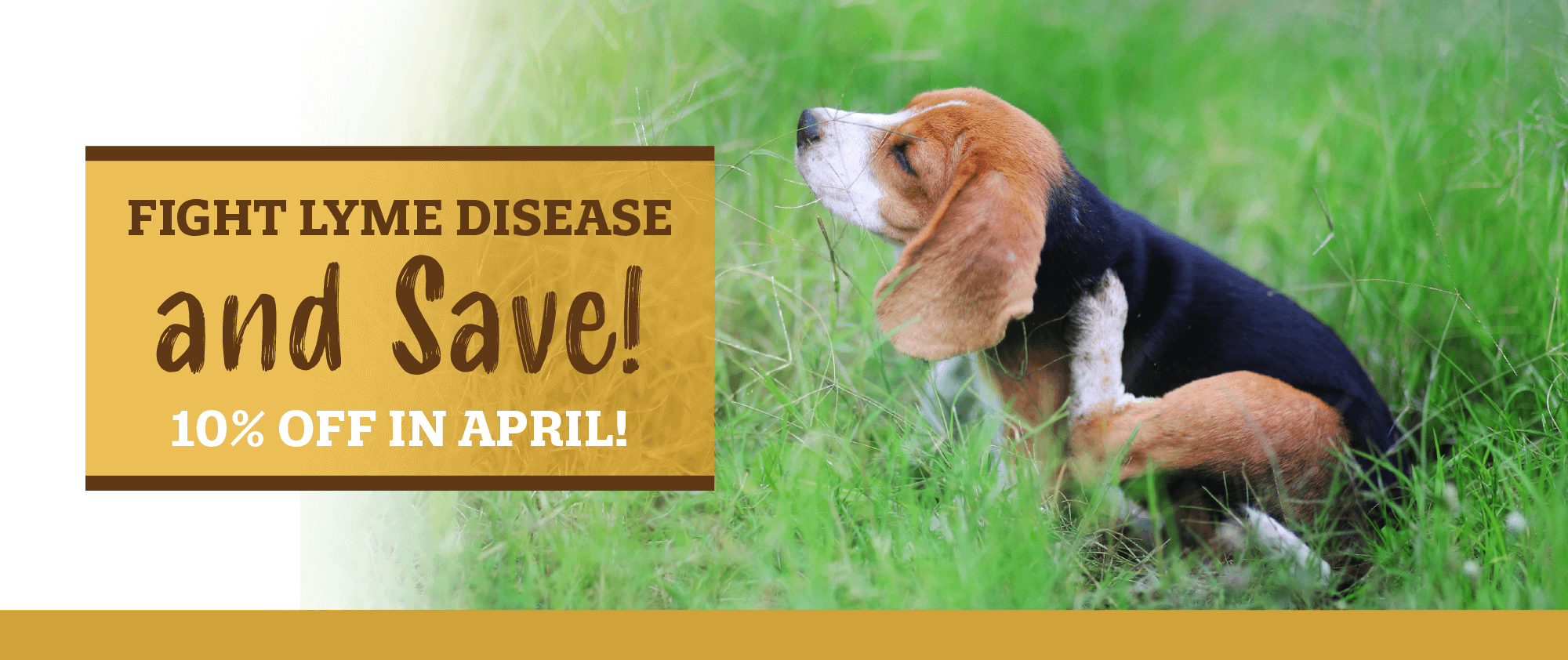 Fight Lyme Disease and Save!